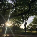 【日本ノムリエ協会】公園&満月ワイン会 in 武蔵野中央公園